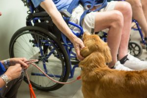 Pet-Therapy_Coadiutore-cane_cane con disabile motorio